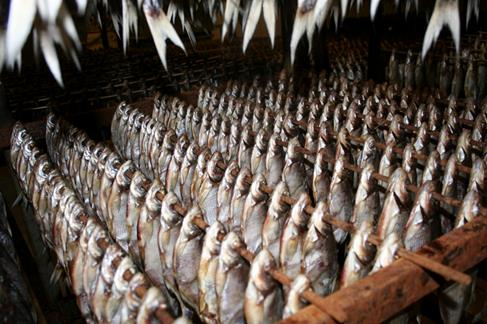 drying of raw materials, drying fish