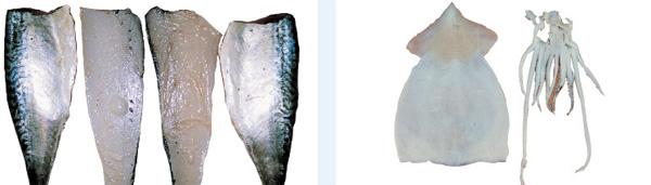 Catfish fish skinning machine